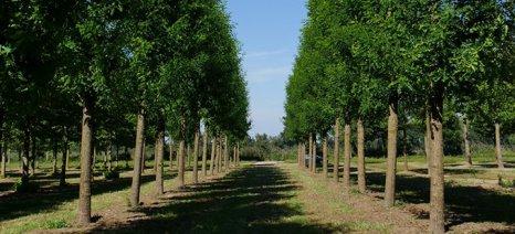 Λιγότερο αυστηρές οι ποινές για τους δικαιούχους του Μέτρου 221 «Πρώτη Δάσωση γεωργικών γαιών»