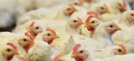 Άρτα: Πρότυπη εκτροφή πτηνών παραγωγής κρέατος με μειωμένο περιβαλλοντικό αποτύπωμα
