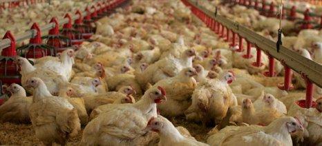 Οικονομικά ζητήματα και ανάπτυξη απασχολούν τον πτηνοτροφικό κλάδο