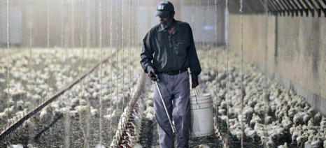Νέα στοιχεία για το πτηνοτροφείο της... κολάσεως στην Αχαΐα