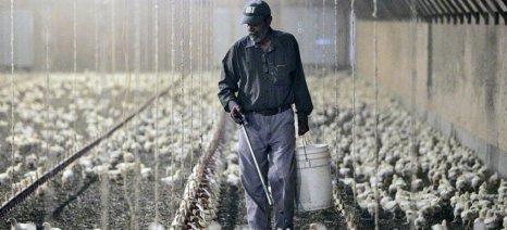 Εγκύκλιος από τον ΟΓΑ με ό,τι χρειάζεται για την ασφάλιση παράτυπων μεταναστών εργατών γης