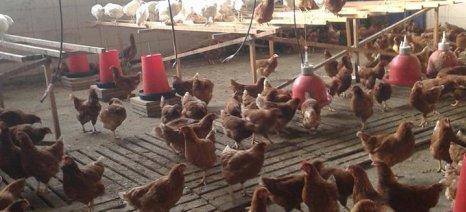 Την κατάργηση του συμπληρωματικού ΕΝΦΙΑ για τις αγροτοπτηνοτροφικές εγκαταστάσεις ζητά η ΠΕΟΠΠ