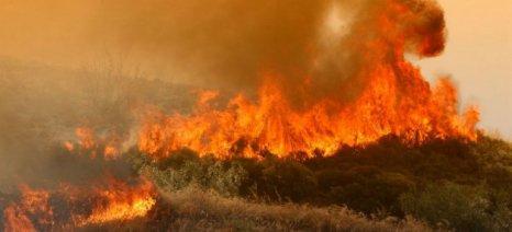 Αιτήσεις για το πρόγραμμα Κρατικών Οικονομικών Ενισχύσεων «Πυρκαγιές 2014, 2015 και 2016» έως 21/8