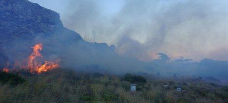 Ενίσχυση de minimis 10,50 ευρώ ανά αιγοπρόβατο στους πληγέντες από την πυρκαγιά της Λακωνίας
