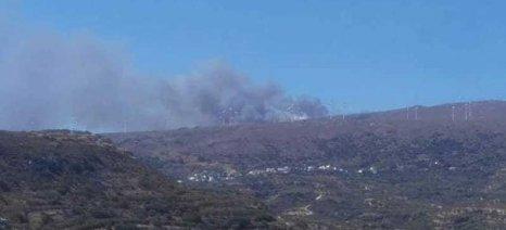 Ζημιές υπέστησαν οι κτηνοτρόφοι της Σητείας από τη μεγάλη πυρκαγιά στα Αχλάδια