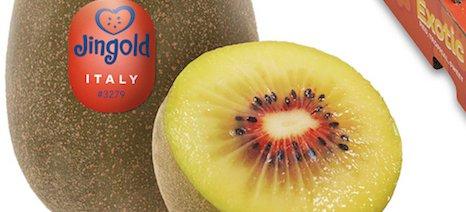 Οι δέκα υποψηφιότητες για το βραβείο καινοτομίας της Fruit Logistica 2019 - 4 συμμετοχές από Ιταλία