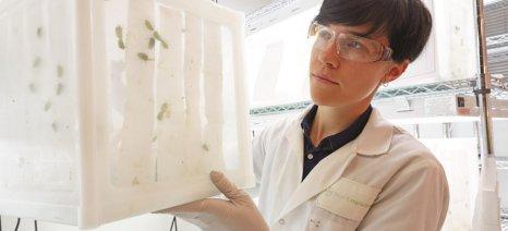 Συνεργασία Bayer και Ινστιτούτου Μοριακής Βιολογίας και Βιοτεχνολογίας του ΙΤΕ για την καταπολέμηση των εντόμων
