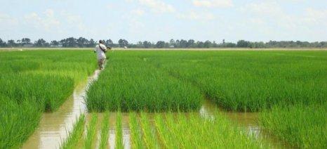 Πρωτοπόροι στη γεωργία ακριβείας αγρότες της Χαλάστρας