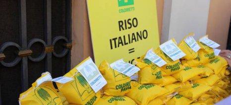 Στους δρόμους της Ρώμης οι καλλιεργητές ρυζιού εναντίον των αθρόων εισαγωγών από την Ασία