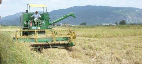 Μόνο δύο καλλιεργητές ρυζιού έχουν μείνει στη Μεσσηνία
