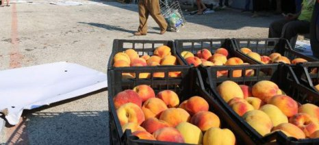 Κατέσχεσαν σχεδόν 7 τόνους σάπια αχλάδια και ροδάκινα στον Πειραιά