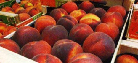 Πέντε χρόνια εμπάργκο της Ρωσίας στις εισαγωγές φρούτων και λαχανικών της Ε.Ε.