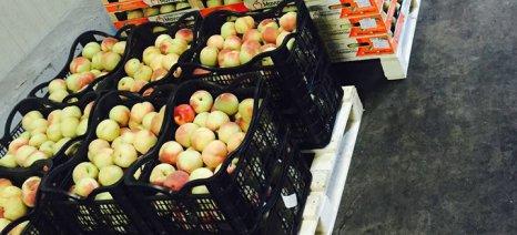 """""""Ευκαιρία"""" για άρση του ρωσικού εμπάργκο στα νωπά αγροτικά προϊόντα"""
