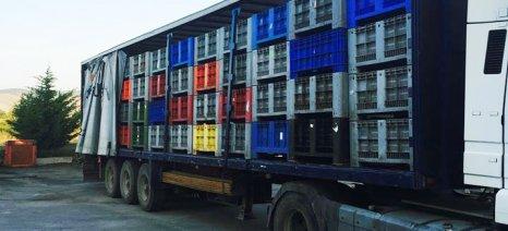 Παράνομες εξαγωγές ροδακίνων στη Βουλγαρία καταγγέλει η Ένωση Κονσερβοποιών