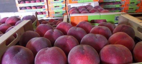 Συνολικά 18.500 τόνους φρούτα και λαχανικά έχει αποσύρει η Ελλάδα από την έναρξη του ρωσικού εμπάργκο μέχρι τις 30 Ιουνίου