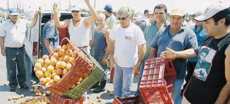 Σήμερα λαμβάνουν τις αποζημιώσεις οι ροδακινοπαραγωγοί
