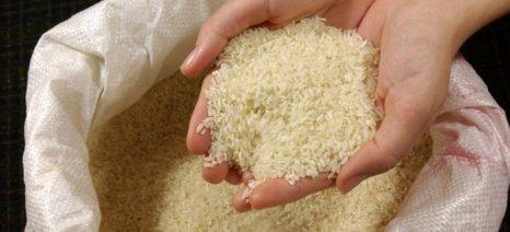 Μείωση καλλιέργειας ρυζιού αποφάσισαν οι παραγωγοί στις Σέρρες