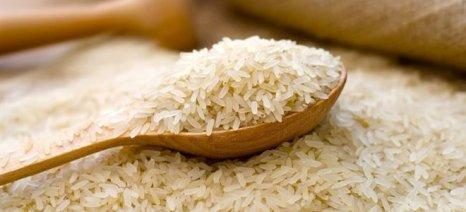 Το ρύζι πρέπει να μαγειρεύεται στην καφετιέρα φίλτρου για να φεύγει το αρσενικό του