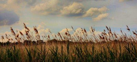 Ξεκινά τη συγκέντρωση ρυζιού από παραγωγούς η ΕΑΣ Θεσσαλονίκης