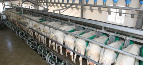 Διευκρινίσεις για την ενίσχυση γαλακτοπαραγωγών των μικρών νησιών του Αιγαίου