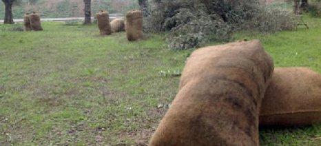 Χαλκιδική: 53χρονος έκλεψε από χωράφι 60χρονης 150 κιλά ελιές