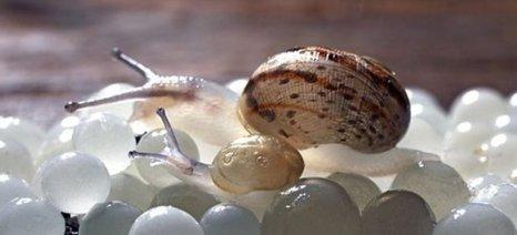 Χαβιάρι από σαλιγκάρια παρήγαγαν μαθητές της Αμερικανικής Γεωργικής Σχολής