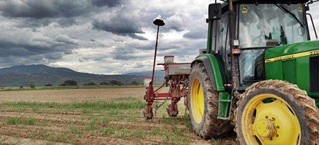 Σέρρες: Επανασπορά του αράπικου φυστικιού, λόγω συνεχών βροχών