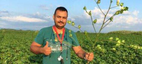 Το κόμμα «Δημιουργία Ξανά» προτείνει να εγκαταλείψουν οι Έλληνες αγρότες τη βαμβακοκαλλιέργεια