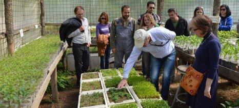Πώς καλλιεργούμε τα αρωματικά φυτά - όλα όσα πρέπει να ξέρετε