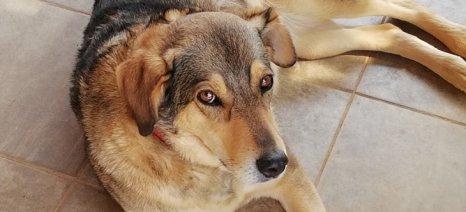 Αποσύρεται το νομοσχέδιο για τα ζώα συντροφιάς