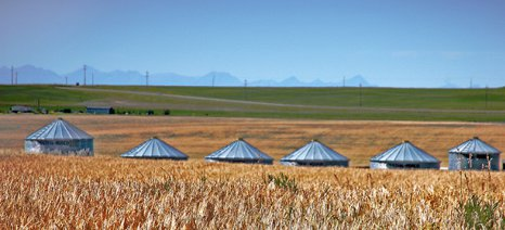 Μειωμένη κατά 16% η φετινή παραγωγή σιτηρών στη Ρωσία
