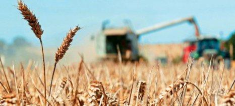 Με 0,19 ευρώ το κιλό παραλαμβάνει σκληρό σιτάρι η ΕΑΣ Βόλου