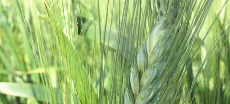 Ο πίνακας με τα ποσά των συνδεδεμένων ενισχύσεων για επτά καλλιέργειες - πληρωμή εντός της εβδομάδας