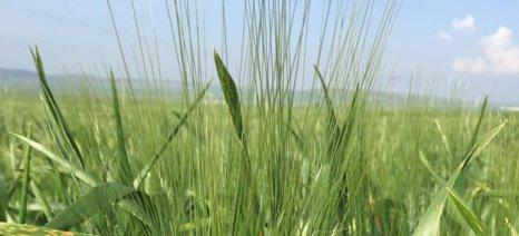 Παιχνίδια των hedge funds με τα αγροτικά εμπορεύματα, ενώ η ξηρασία απειλεί πολλές περιοχές της γης
