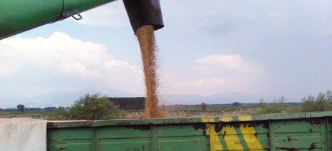 Τα προβλήματα ρευστότητας και οι μειωμένες τιμές πιέζουν τους παραγωγούς σιτηρών, λένε οι COPA-COGECA