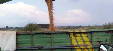 Εξόφληση στους παραγωγούς που παρέδωσαν σκληρό σιτάρι στον Α.Σ. Βόλου με τελική τιμή 0,175 ευρώ το κιλό