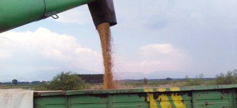 Τι πρέπει να ξέρετε για να πάρετε τη συνδεδεμένη ενίσχυση στο σκληρό σιτάρι για το 2019