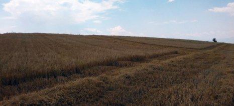 Γέμτος: Τα οφέλη από τη μη καύση των σιτοκαλαμιών φαίνονται από τη δεύτερη χρονιά
