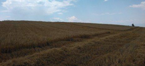 Για αδιαφορία του ΥΠΑΑΤ για τους Έλληνες σιτοπαραγωγούς που επλήγησαν από την ξηρασία κάνει λόγο ο Κεφαλογιάννης