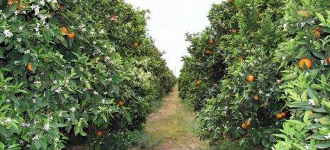Οδηγίες για την συνδεδεμένη ενίσχυση στα προς χυμοποίηση πορτοκάλια