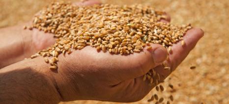 Διαγωνισμός από τον Αγροτικό Συνεταιρισμό Βόλου για την πώληση 2.350 τόνων σκληρού σίτου