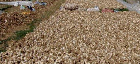 Αθέμιτος ανταγωνισμός στη διακίνηση σκόρδων