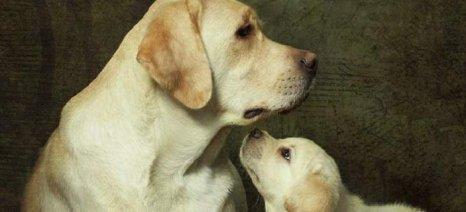 Ποινή φυλάκισης και πρόστιμο για κακοποίηση σκύλου
