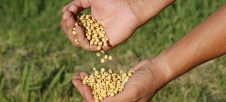 Ημερίδα για την καλλιέργεια της σόγιας στη Δράμα