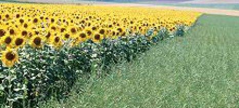 """Ενεργειακές καλλιέργειες σε λιγνιτωρυχεία για την νέα μονάδα της ΔΕΗ """"Πτολεμαίδα 5"""""""