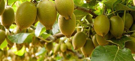 Συνεχίζεται η βελτίωση των εξαγωγών ακτινιδίων, εσπεριδοειδών και μήλων