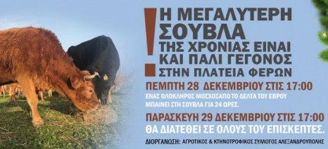 Η μεγαλύτερη σούβλα της χρονιάς στις Φέρες Έβρου από τον τοπικό κτηνοτροφικό σύλλογο