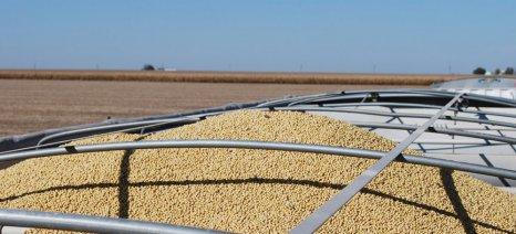 Ενισχύεται το εμπόριο αγροτικών προϊόντων Αργεντινής - Κίνας, με όχημα τη σόγια