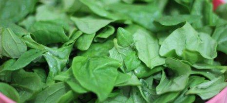 Πόσο φυτοφάρμακο έχουν τα γνωστότερα προϊόντα μαναβικής των σούπερ-μάρκετ;