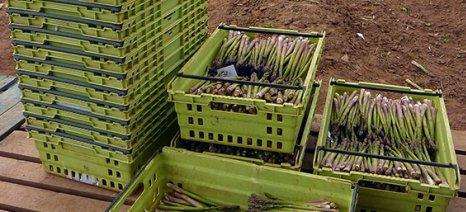 Γαλλία, Γερμανία και άλλες χώρες δίνουν έκτακτη βοήθεια στους αγρότες - Ο Βορίδης μιλάει για επιμέρους μέτρα